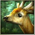 Forest HD - Лесные обои для андроид бесплатно apk