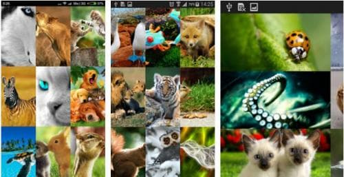 Animal Wallpapers Free 2016 HD