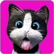 Daily Kitten